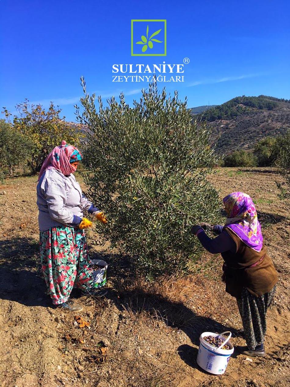 Sultaniye Zeytinyağları